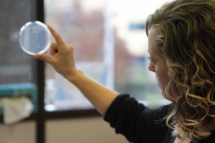 Jennifer Hampton Hill examining a petri dish